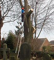 Ash, Horbury Cemetery