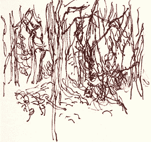 Sessile oaks, holly and bramble drawn with a brown 08 Pilot Drawing Pen.