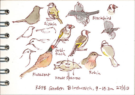 birdwatch 2013