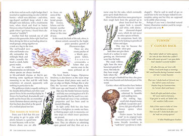 My Dalesman nature diary for January