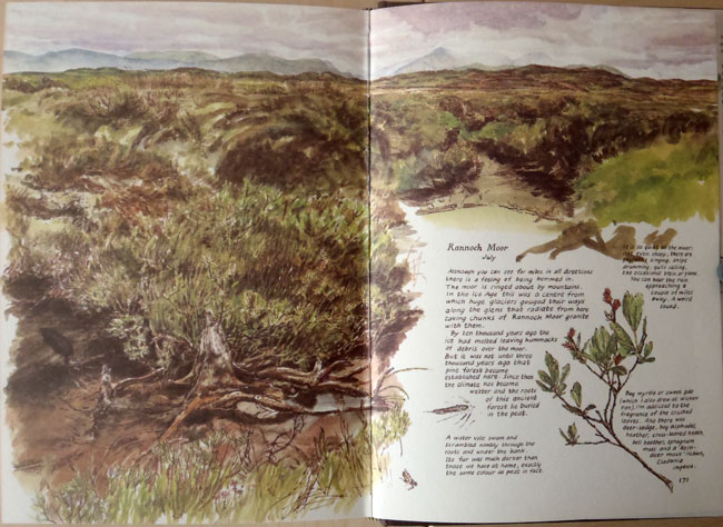 Rannoch Moor, July 1980, Britain sketchbook.
