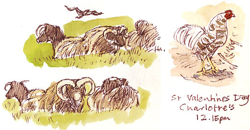 sheep and cockerel