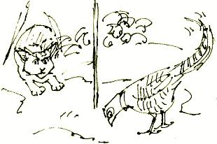 cat and pheasant