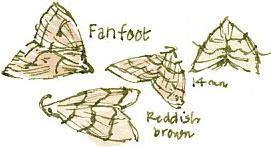 fan-foot