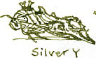 silver y