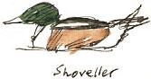 shoveller