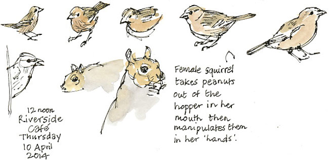 squirrel and chaffinches