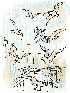 gulls by the beck