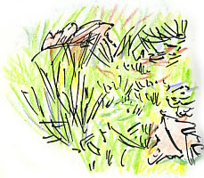 mossy lawn