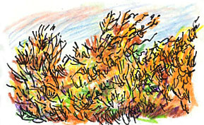 ochre hedge