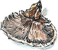 scale of cone