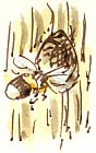 bee at the nestbox