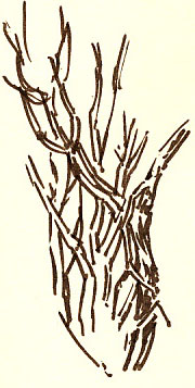 brushpen branch