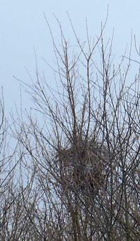 magpie's nest
