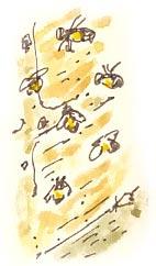 masonbees