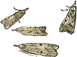 bee motha