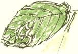 bramble leaf mine
