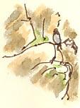 peregrine perching