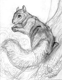squirrel 1986