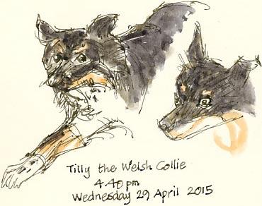 Tilly 29/04/15