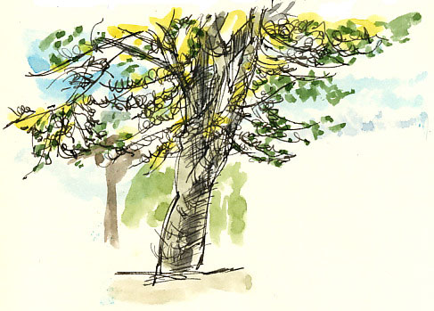 high street tree