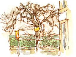 tree, Cluntergate