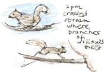 squircross