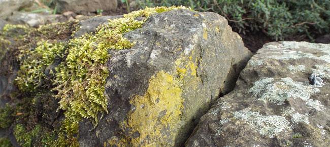 cap stones