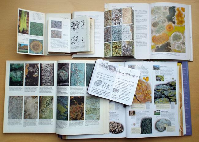 lichen books