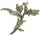 weed stem