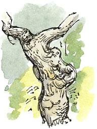 ash trunk