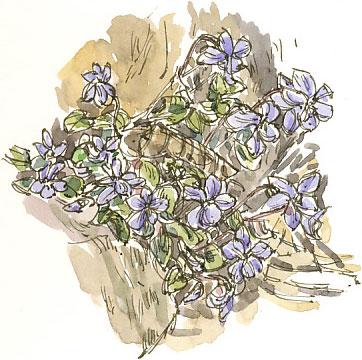dog-violet