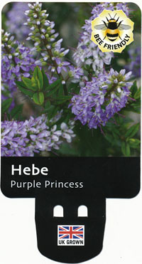 hebe label