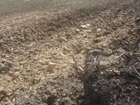 alluvial deposit