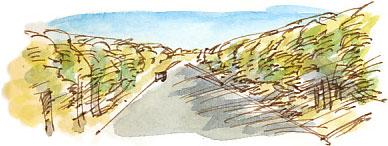 Bullcliffe Woods, Denby Dale Road.