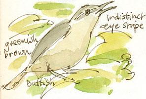 gardenwarbler