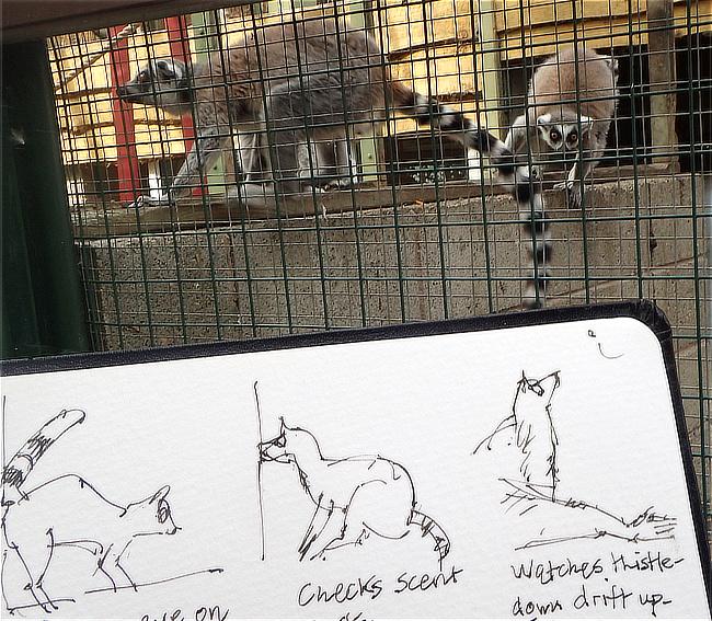 lemur sketch