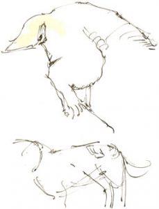 Border terrier sketches