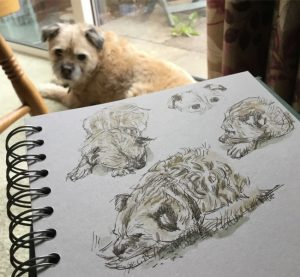Drawing a border terrier