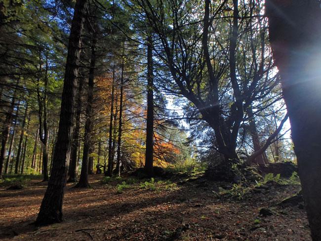 Langsett woods