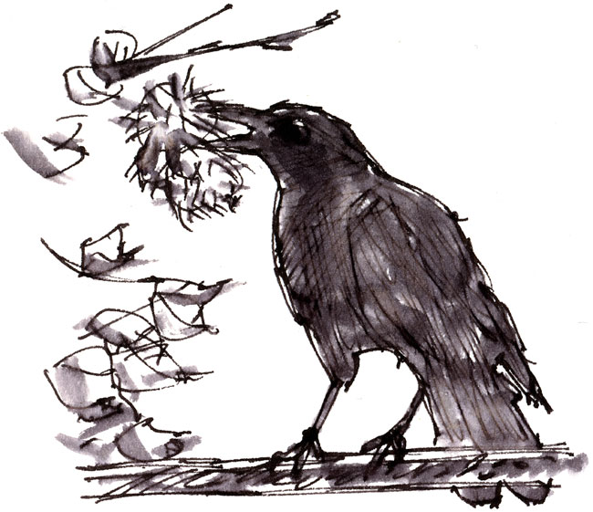 crow with sweet chestnut