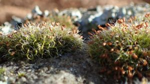 moss on wall top