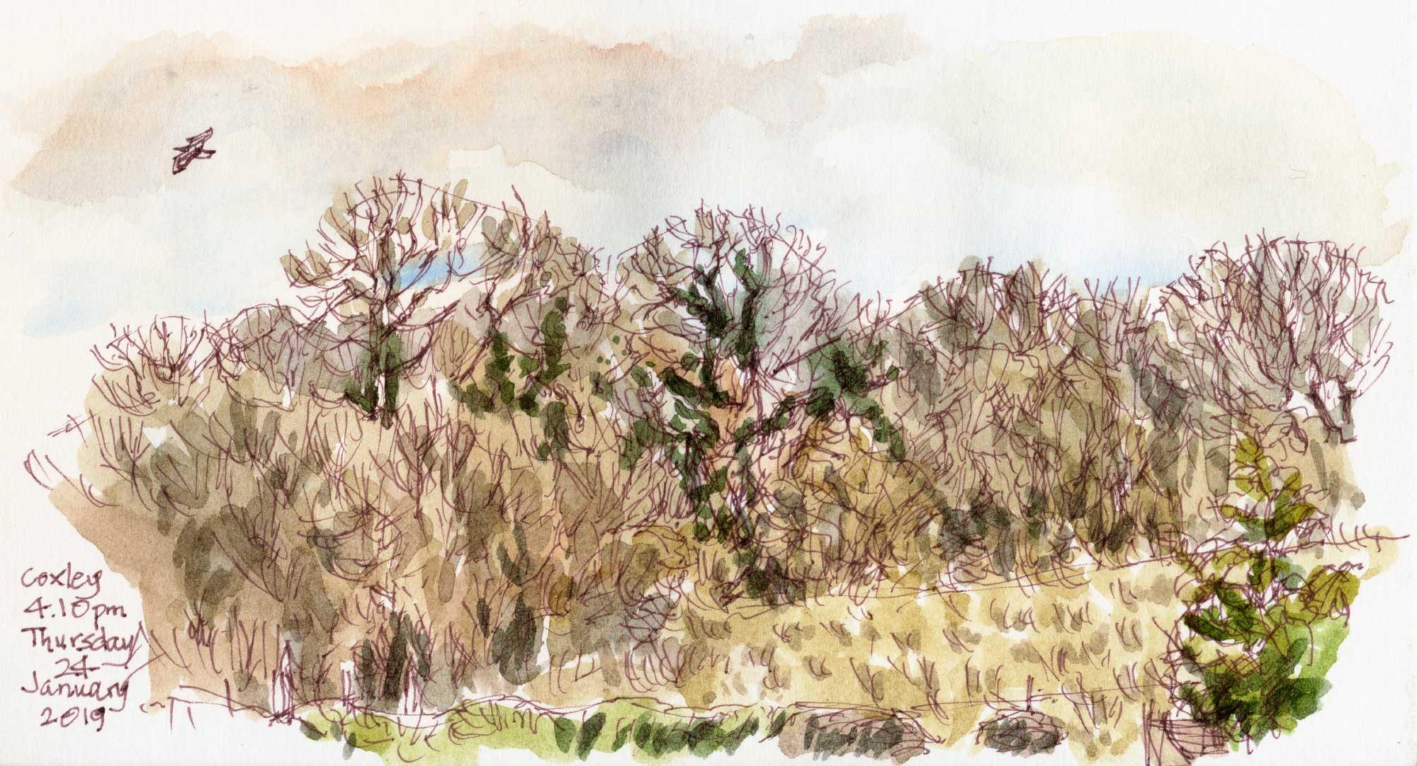 Coxley Wood