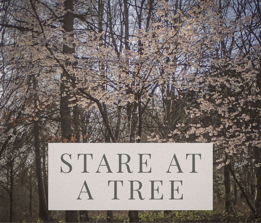 stare at a tree